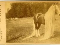 Линус — длинногривый чудо-конь