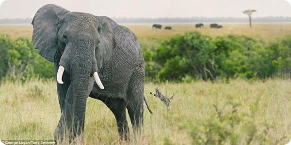 Африканское путешествие