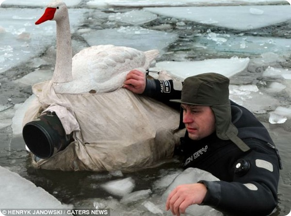 Фотографии птиц Хенрика Яновски