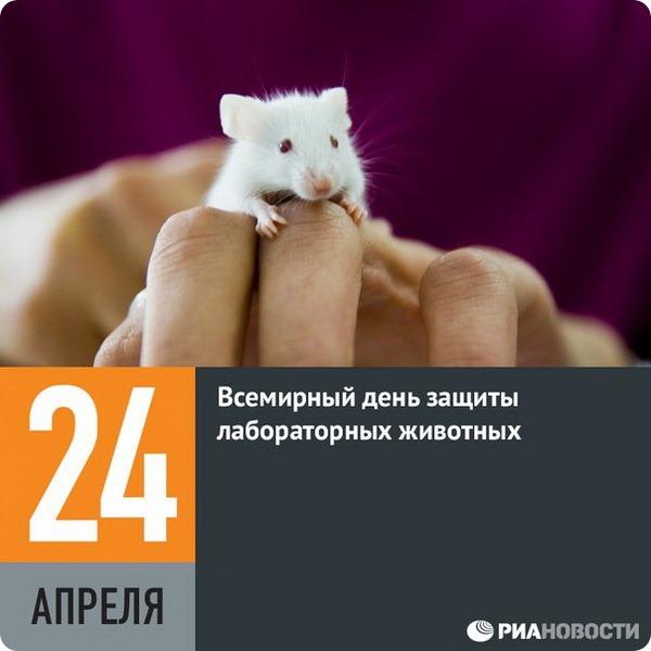 24 апреля — всемирный день защиты лабораторных животных