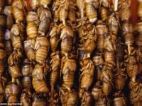 В Нью-Йорке ожидается нашествие цикад