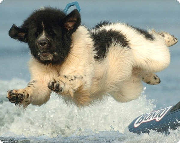 Пёс-спасатель по кличке Визз