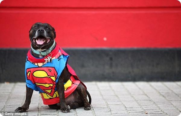 Костюмированное собачье шоу в Лондоне