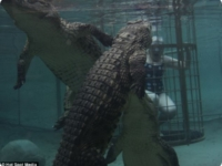 Пенсионерка в бассейне с крокодилами