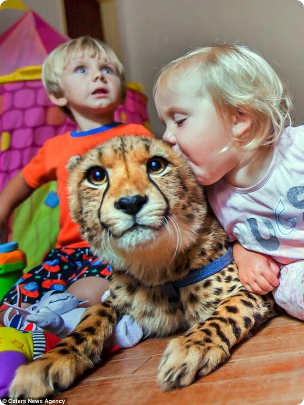Домашние гепарды!