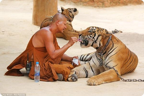 Храм Тигра в Тайланде