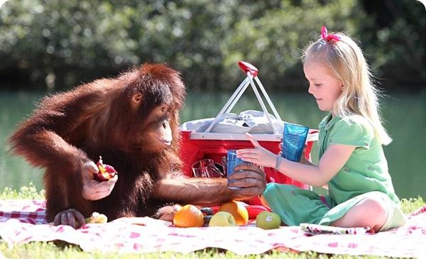Дружба Эмили Бланд и орангутанга Риши