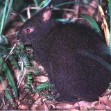 Лазающий заяц