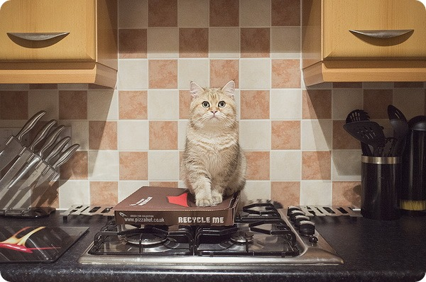 Почему кошек нельзя кормить едой с нашего стола?