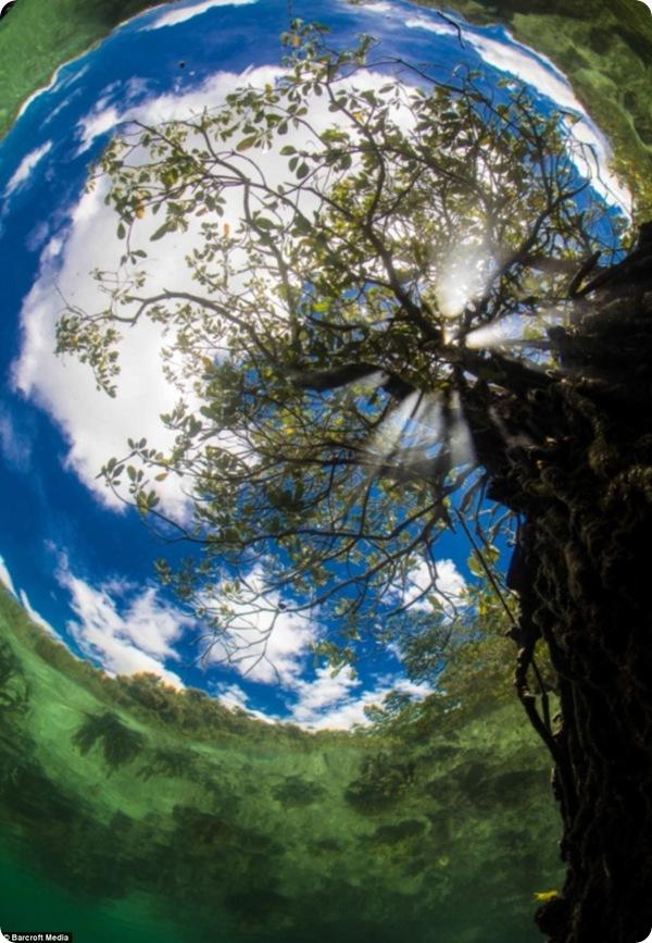 Работы с конкурса на лучшую подводную фотографию