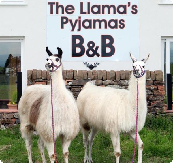 Отель с ламами