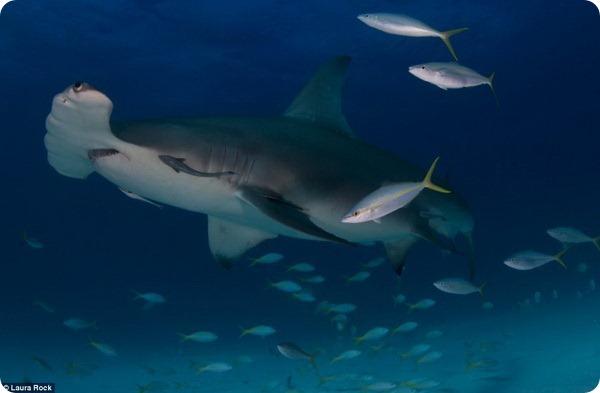 Лучшие фотографии подводного мира
