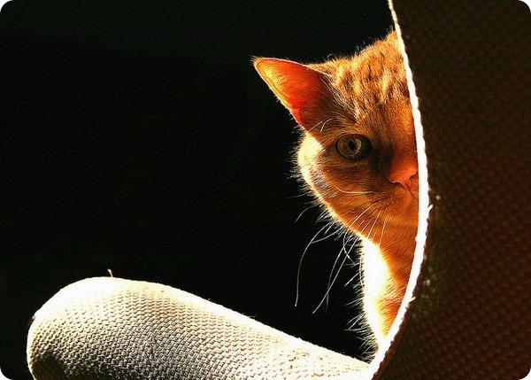 Запах кошачьей мочи: причины и способы устранения