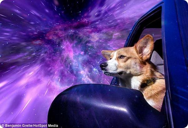 Собаки в пространстве