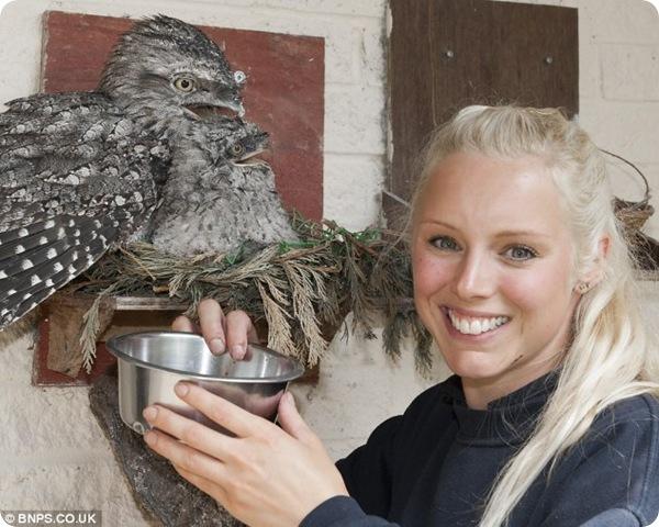 Самая старая в мире пара сов обзавелась потомством