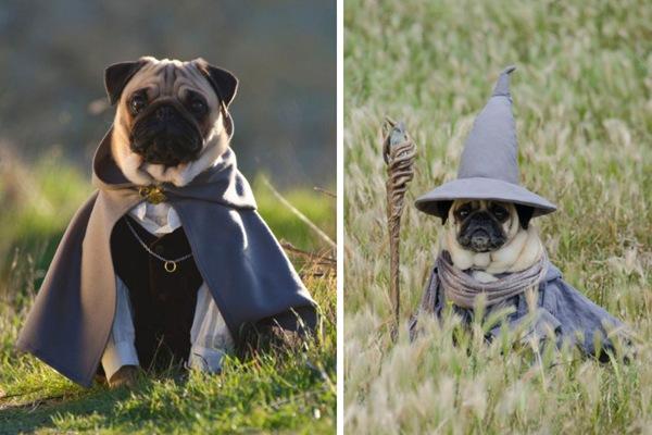 Необычные наряды для мопсов