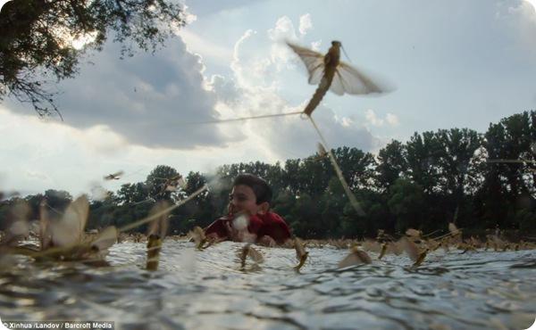 Нашествие длиннохвостых поденок в Венгрии