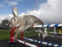 Кролики-легкоатлеты