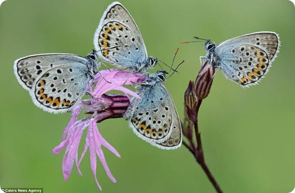 Фотографии бабочек на рассвете!