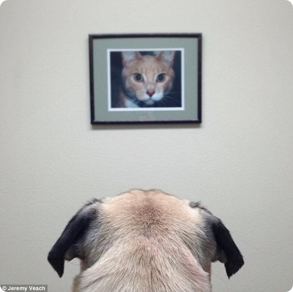 Забавные фотографии мопса по кличке Норм