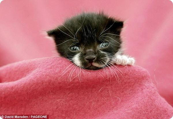 Путешествие двухнедельного котёнка Феликса