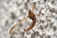 Самые медленно летающие насекомые