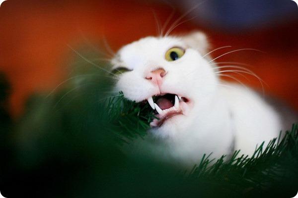 Кошачьи болезни, заразные для человека