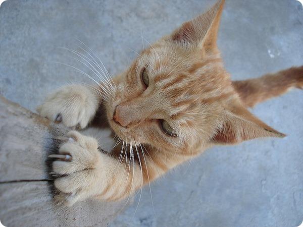 Как отучить кошку царапать мебель | НА ВЕТКАХ
