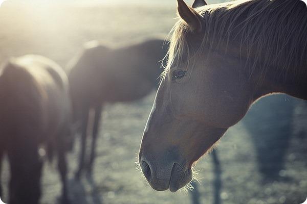 Самые дорогие лошади в мире