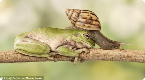 Фото улитки и лягушки от Лесси Себастьяна