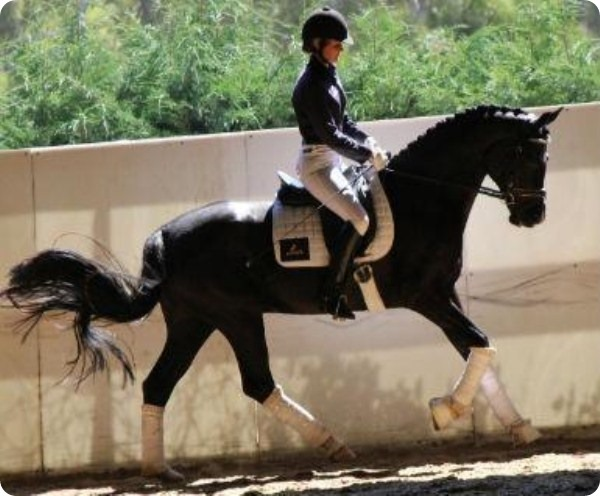 Американская стандарт бредная лошадь по кличке Мистик Парк (Mystic Park).