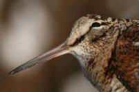 Самые медленные птицы