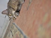 Стерилизация кошек: причины, способы и последствия