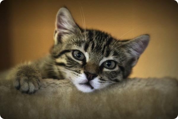 Зачем нужна вакцинация кошек?