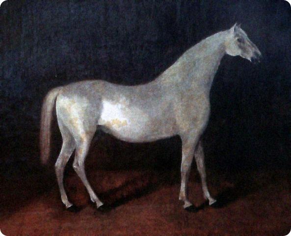 Арабская лошадь по кличке Сметанка.