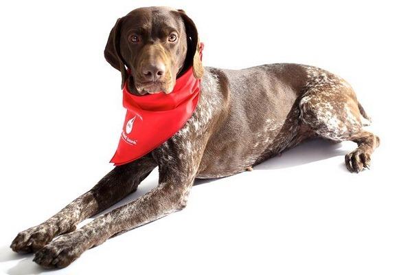 Банк крови для собак