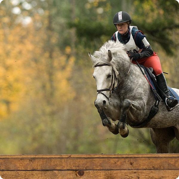 Лошади (лат. Equus)