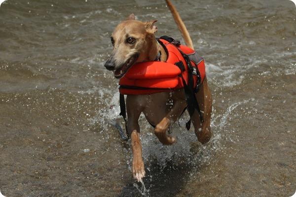 В Японии открыт пляж для собак