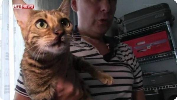 Кошка Шеба осталась жива после падения с 18-го этажа