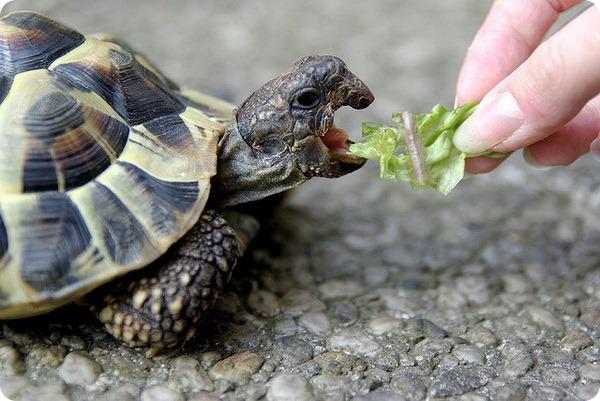 Морские и наземные черепахи лишены каких-либо зубов