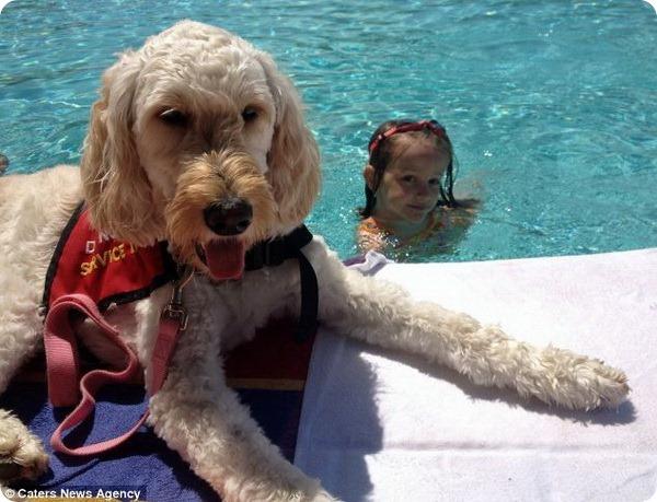 Собака ЛилиБель оберегает жизнь маленькой хозяйки