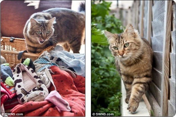 Кот-клептоман из Великобритании