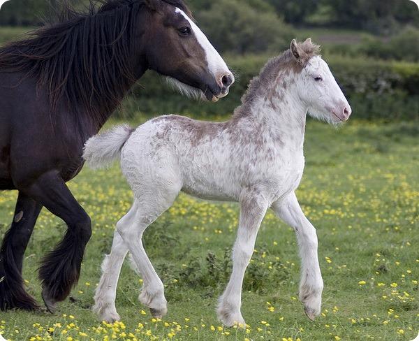 Детеныш лошади – жеребенок.