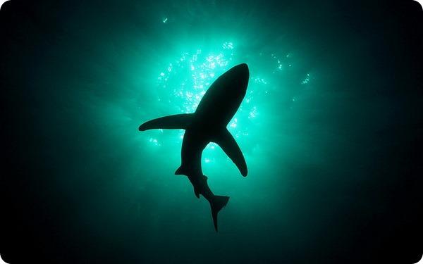 Самые быстрые водные животные