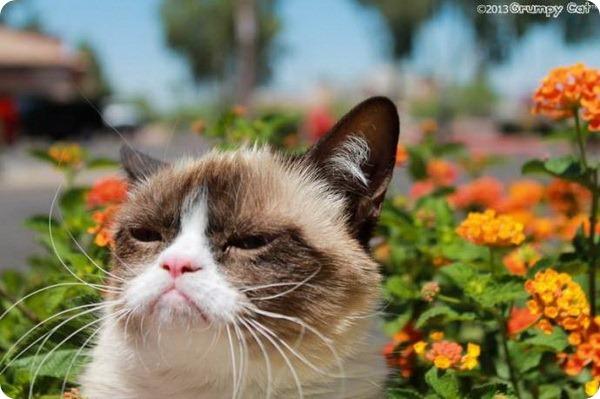 Про кошку Grumpy Cat снимут фильм