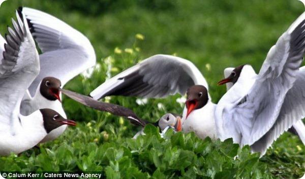 Тупик подвергся нападению голодных и наглых чаек