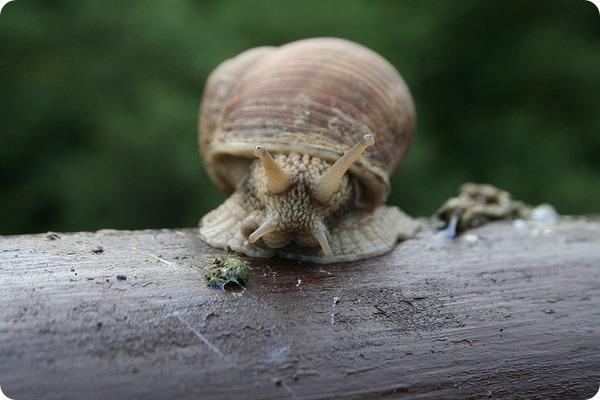 Улитки – моллюски из класса брюхоногих (лат. Gastropoda)