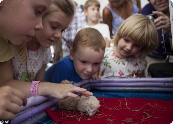 Собственный замок для ежей-альбиносов