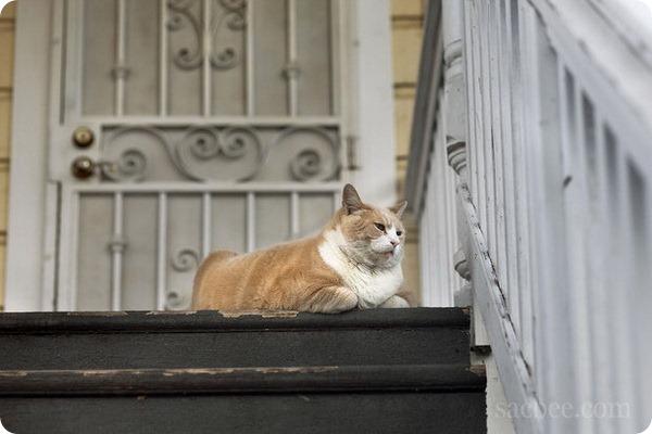 Кот по кличке Норм Лопес становится знаменитее