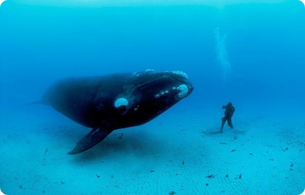 Самые длинные водные животные